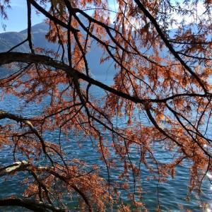 November trees at Lake Como