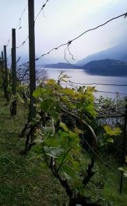 Alto Lario Vines tour guide lake como