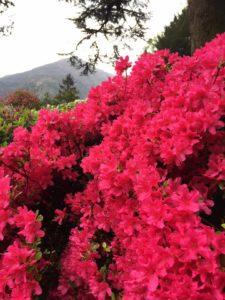 Blooming Villa Carlotta