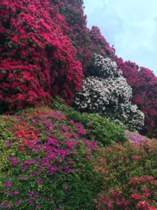 Villa Carlotta blooming season!